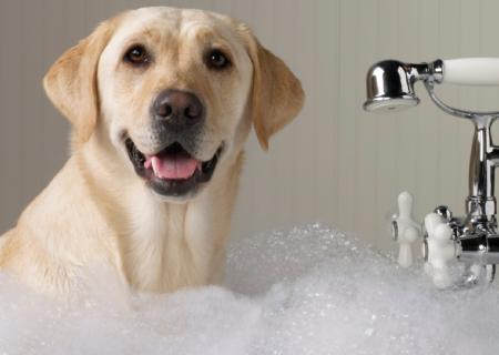 Гигиенические процедуры для собак и кошек