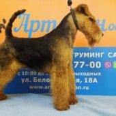 тримминг собак