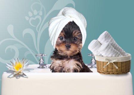 SPA процедуры для собак и кошек