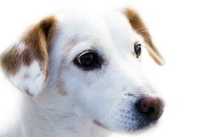 каким собакам нужен тримминг