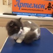 стрижка кошек «Пума»