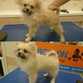 Собака до и после груминга