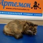 груминг, стрижка кошек