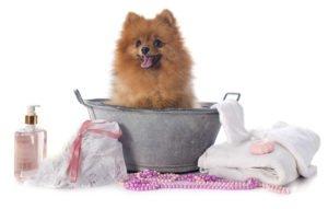 гигиенические процедуры собаке