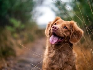 своевременный груминг - здоровье собаки
