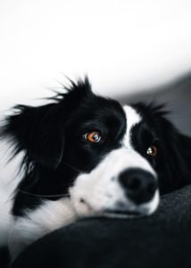 гигиенический груминг собак