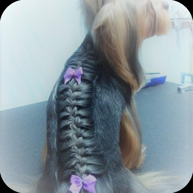 модная стрижка йорка девочки «французская коса»