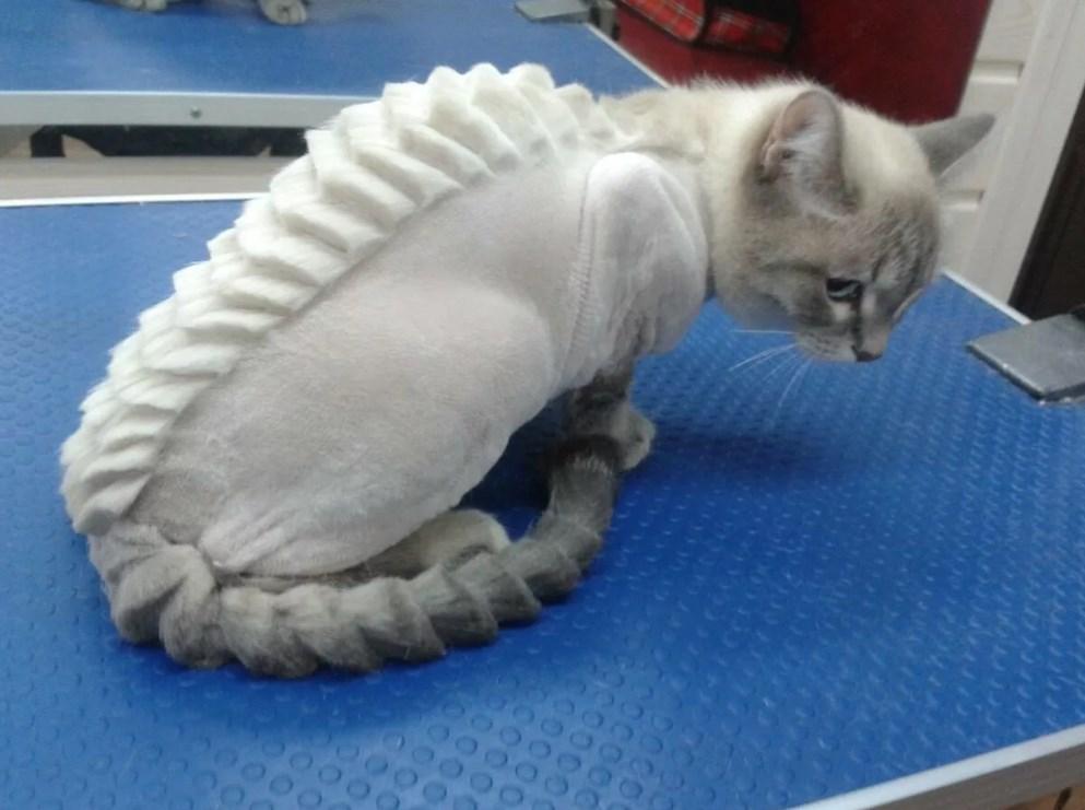 стрижка кошки под дракона фото