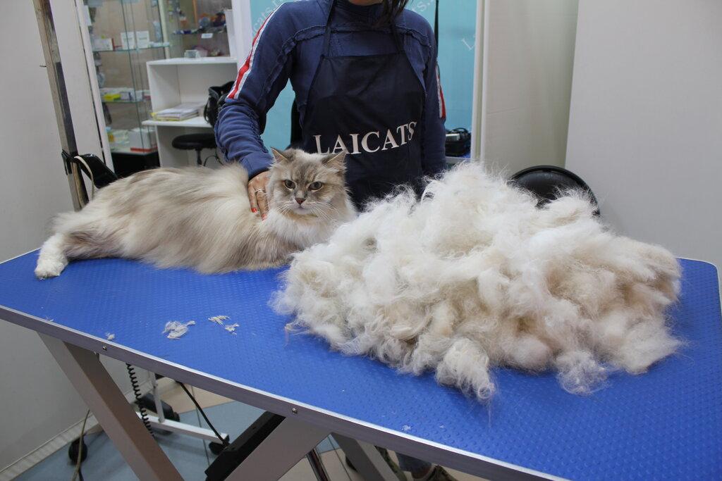 стрижка пушистой кошки фото просле