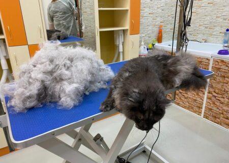 как вычесывать кошку