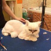 чем лучше вычесывать шерсть у кошек