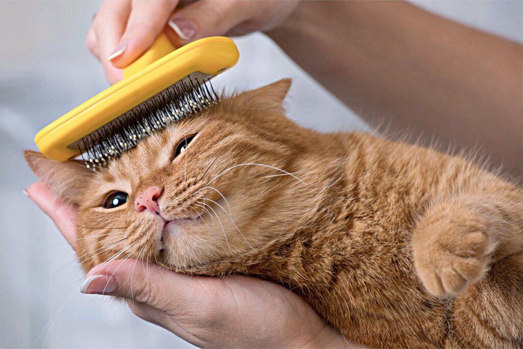 как правильно вычесывать кошку пуходеркой