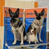 стрижка собак в салоне «АРТЕМОНофф»