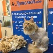 стрижка кошек в салоне «АРТЕМОНофф»